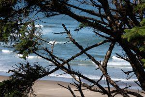 20160701-de Cape Lookout State Park à Neskowin32