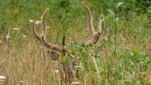 20160719- De Klamath à Patricks Point state ParkMy05
